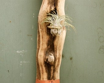 Hand Painted Boho Wood Air Plant wall Holder