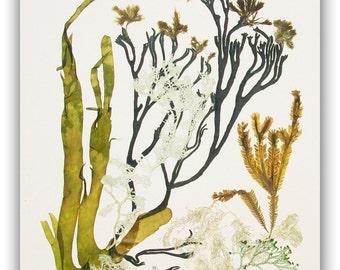 Seaweed art, Pressed seaweeds MADE TO ORDER  Natural seaweed collage pressing, coastal living, beach cottage decor, victorian botanicals