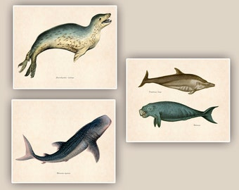 Whale shark, dolphins, sea leopard  Prints, 8x10 nautical prints, set of 3, tea stained background,vintage shabby chic, beach cottage decor
