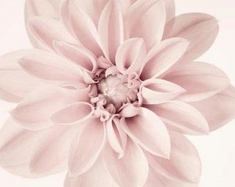Flower Photograph, Pale Pink Girl Nursery Art, Floral Art, Dahlia Print, Art Print, Botanical Wall Art