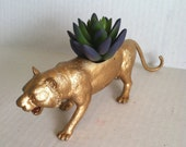 Gold Tiger Planter with Succulent Plant