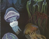 Vintage Book Plate - Jellyfishes / double sided / Coelenterates / Sea Life / Hydrina  / Jelly Fish