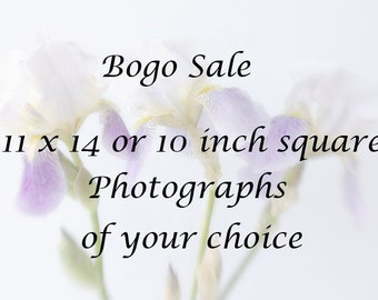 11 x 14 or 10 inch square Photograph of Your Choice, Buy One, Half Price for the Rest