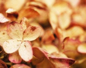 Flower photography, Bathroom Art, Hydrangea photo, Pink Decor, wall hanging, wall art, wall decor, floral decor