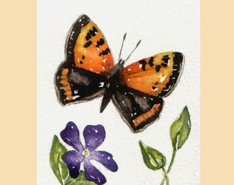 Original Watercolour ACEO - Small Copper Butterfly - reduced to clear