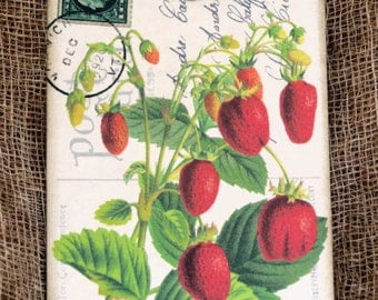Fresh Red Strawberry Tags #342