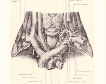 1899 Human Anatomy Print - Thoracic Duct - Vintage Antique Medical Anatomy Art Illustration for Doctor Hospital Office