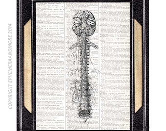 BRAIN and SPINAL COLUMN art print wall decor human anatomy medical science neurology nerves, vintage dictionary book page illustration 8x10
