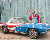 Born in the USA, large original photograph of white boxer dog holding flag in front of vintage Chevy Corvette