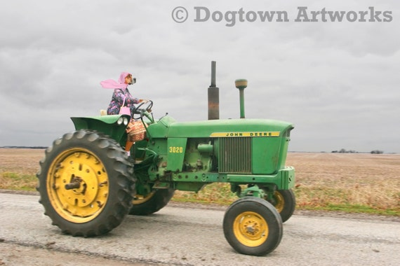 The Dear Deere, large original photograph of female boxer dog wearing vintage clothes and driving a John Deere tractor