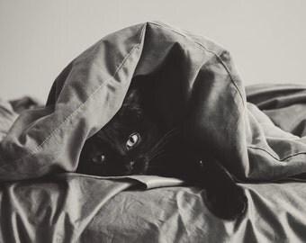 Cat Photography, 8x12 Print, Black and White Photography, Black Cat, Dreamy Photography, Portrait Photography, Cat Art, Love, Fine Art