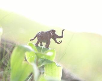 Just Mastodon On • Mastodon Wooly Mammoth Toy Photograph • Macro Photography Decor 5x7 8x10
