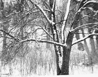 Winter tree photograph - winter storm black and white, nature photography wall art, new england