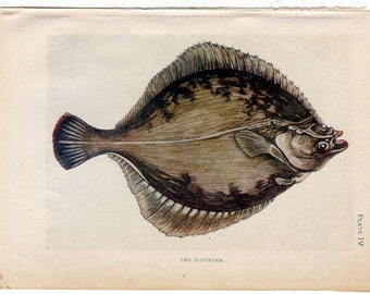 1907 ANTIQUE FISH lithograph - original antique print - sea life marine beach ocean - - flounder