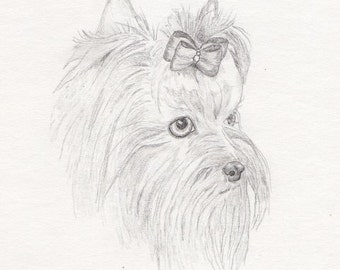 Yorkie Signed Personalized Original Pencil Drawing Double Matted Print -Free Shipping- Desert Impressions