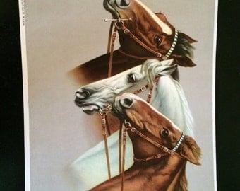 VINTAGE German Horse Print - 3 Horses 1 White