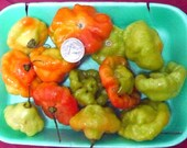 Aji dulce 25 seeds spanish Carribean cooking  june 2016 harvest