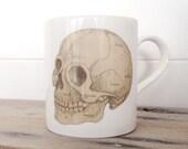 Anatomical Skull Illustration Bone China Mug