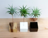 Palm Tree Wood Block // Air Plant Stand // Wood and Copper // Handmade