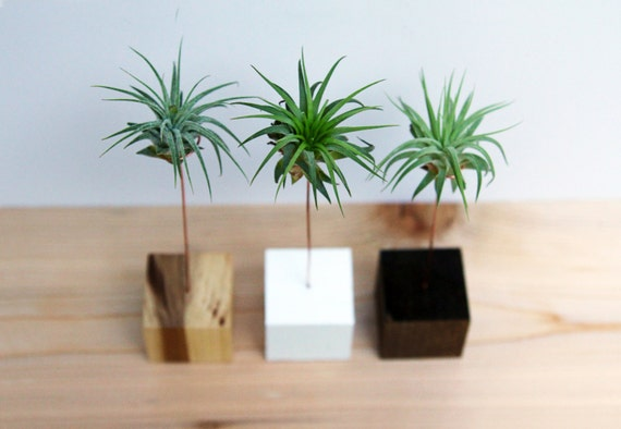 ... Block Palm Tree // Air Plant Stand // Wood and Copper // Handmade