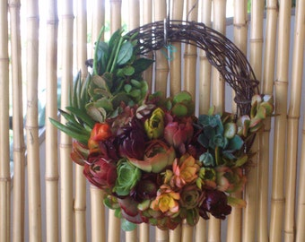 Colorful Seasons of Sunshine 11 inch Growing Succulent Plants Willow Branches Living Wreath