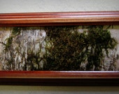Birch Bark  Framed Art with Natural Moss