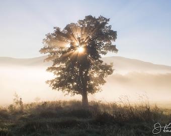 The Sun Tree Print