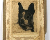Vintage Original Etching by Pierre Nuyttens, Boston Terrier