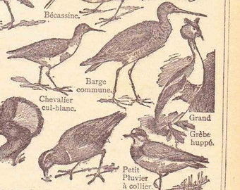 Beautiful Antique Print Encylopedia Page 1920s Engraved Ilustrations French Waterfowl paper projects scrapbooking, collage