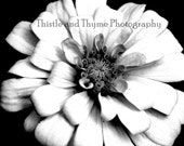 Black and White Photographic Print - Flower photography