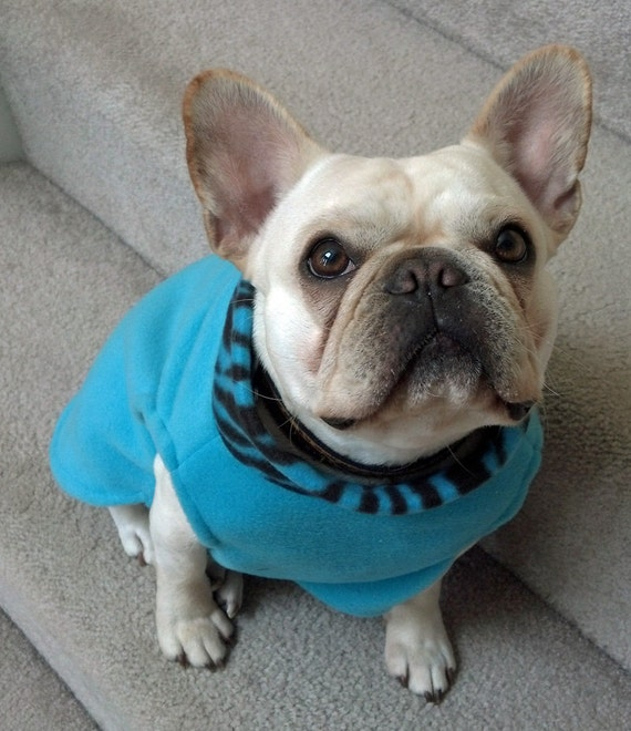 french bulldog jacket french bulldog turquoise pullover jacket with by 9527