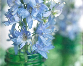 "Fine Art Photography-Floral Photography-Nature- Spring--Feminine- Blue-Green-Delphiniums-""Fragile"" 8x8 print"