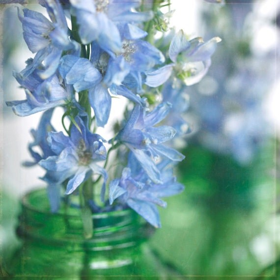 "Fine Art Photography-Floral Photography-Nature- Spring--Feminine- Blue-Green-Delphiniums-""Fragile"" 8x8 print"