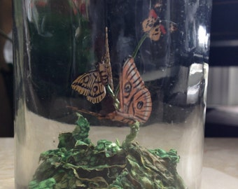 Miniature Butterfly Specimens In jar Display