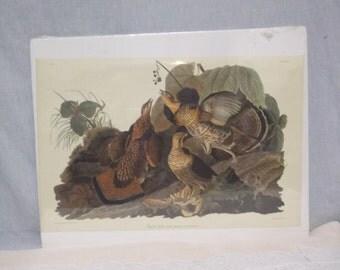 Vintage John Audubon Print, Ruffled Grouse, Birds, Nature, Woodlands