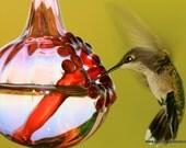 GLN- The Kennedy Style Hummingbird Feeder, The Original One Piece Drip-less Hummingbird Feeder/ Gold line original