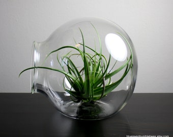 "large 7"" hand blown glass sitting dome plant terrarium"