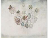 flower photography, dried poppies, nursery art decor