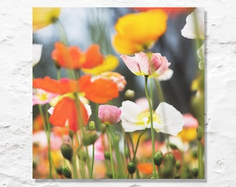 flower photograph poppy poppies fine art photography wall decor garden nature photo floral spring