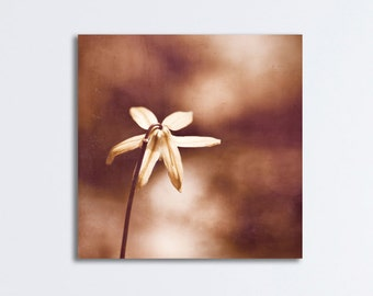"Flower Canvas Print - brown nature copper wall art bronze photo beige modern photography canvas gallery wrap neutral wall decor, ""Copper"""