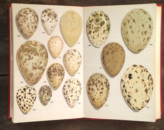 bird book Nesting Birds Eggs and Fledglings by Winwood Reade and Eric Hosking