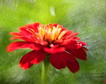 Red Flower, Nature photography, Summer wild flowers, Flower print, Lensbaby photograph, Bright Red and Green Fairy garden, Engagement gift