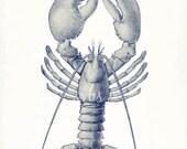 Vintage American Lobster Natural History Nautical Giclee Print 8x10 ocean blue