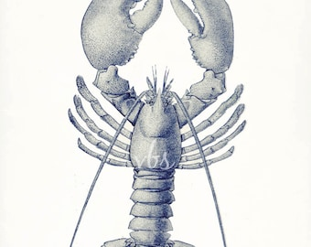 Vintage American Lobster Natural History Nautical Giclee Print 8x10 ocean blue
