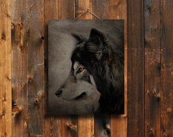 Staring - Wolf art - Wolf decor - Wolf photography - Native American style - Native American - Wolf canvas - Wolf dog