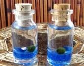 FREE SHIPPING USA Japanese Marimo マリモ mini terrarium (Blue w/ white)