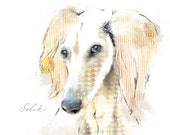 Saluki Fine Art Print