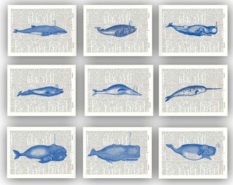 Whale art,  whale print collection navy blue, dictionary page, beach cottage decoration, marine mammals, kids room decor, school wall decor