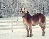 Sled Horse, Winter Photo, Snow, Home Decor, Office Decor-8x12