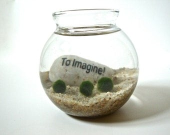 "Marimo Ball Underwater Zen Aquarium with Inspirational Word Stone ""To Imagine"", Inspirational Gift, Inspirational Decoration, Rock Decor"